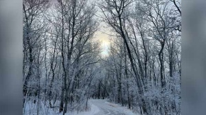 One of the scenic trails at Assiniboine Park. Photo by Ian Shanley.