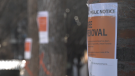 Trees marked for removal in the Eau Claire area ahead of the start of several construction projects.