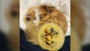 Punkin, Corey Quintaine's cat, curls up next to a plaque bearing Punkinhead, the Eaton's mascot and his namesake, in a recent image. (Submitted photo Corey Quintaine)