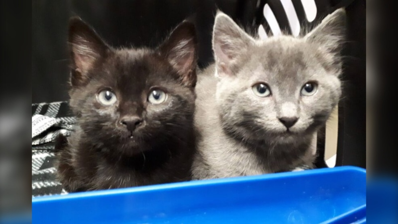 Terry and Peggy were born with only three-and-a-half legs. The B.C. SPCA is hoping to raise money for their care. Source: B.C. SPCA