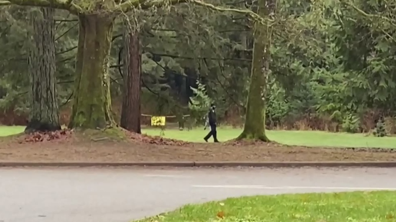 More coyote attacks in Stanley Park