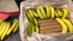 Bricks of what turned out to be cocaine are shown in a shipment of bananas. (Kelowna and West Kelowna RCMP)