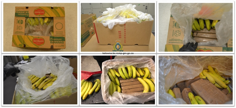 The Kelowna and West Kelowna RCMP say these bricks of cocaine were found in shipments of bananas.