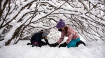 Elly Pergant Johnson, 10, left, and Elsie Sutherland, 10, right, play under the snow-laden branches of a bush during a snowstorm in Ottawa, on Saturday, Jan. 16, 2021. A snowfall warning is in effect with Environment Canada predicting between 15 to 30 cm of snow by tonight. (Justin Tang/THE CANADIAN PRESS)