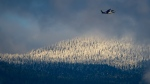 Snow covered trees on the North Shore mountains are seen as a Helijet passenger helicopter prepares to land at a helipad on the harbour in downtown Vancouver, on Monday, Dec. 28, 2020. (Darryl Dyck / THE CANADIAN PRESS)