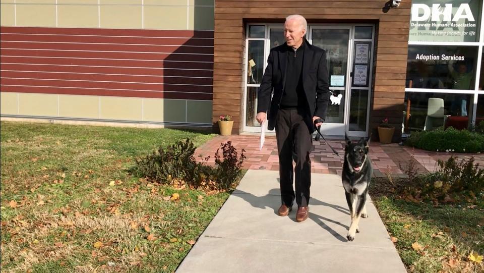 Joe Biden and his newly-adopted German shepherd
