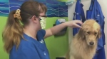 Dog groomers fight to be deemed essential