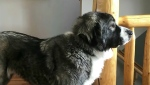 A Canmore couple turned to Facebook for help finding their rescue dog Leeza. Kevin Fleming reports