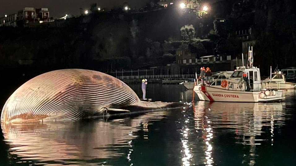 Italy whale