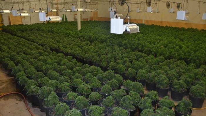 Chatham-Kent police say they have located four illegal marihuana grow operations in Chatham-Kent in six months. (Courtesy Chatham-Kent police)