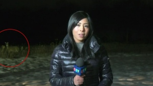 CTV's Lexy Benedict is photobombed by some deer during a live hit on Wed., Jan. 20, 2021 (CTV News Barrie)