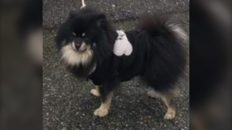 Mounties in Burnaby say they have reunited a small dog found in a stolen vehicle earlier this week with his family. (Burnaby RCMP)