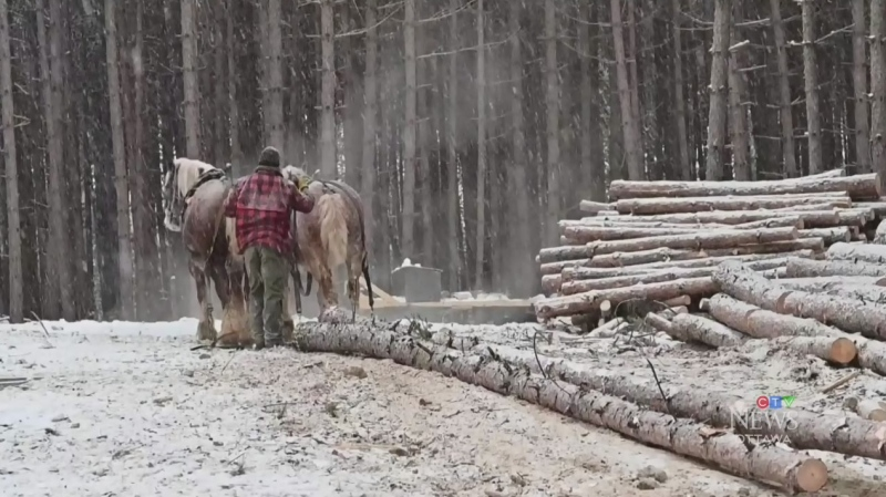 The Ottawa Valley Horse Logger