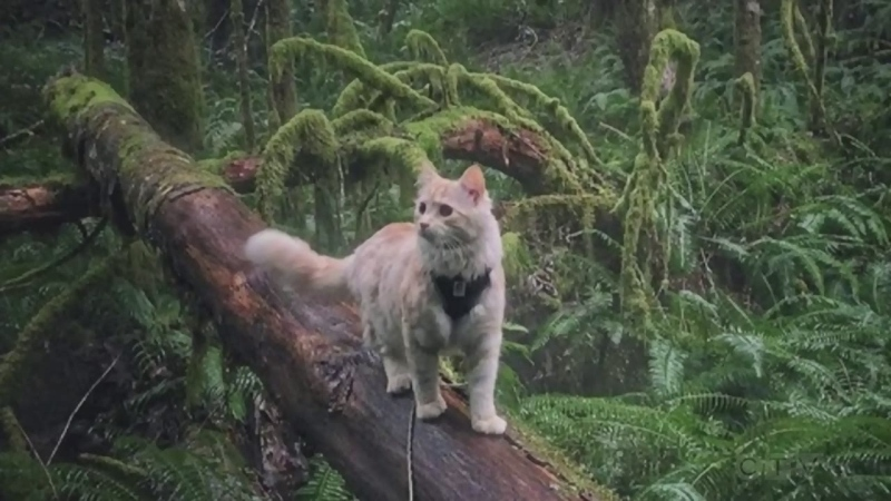 Sawatsky Sign-Off- Adventure Cat