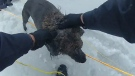 Police rescue woman and dog from icy waters