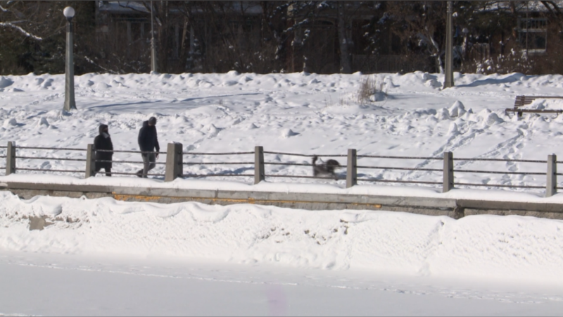 A couple walk their dog along the Rideau Canal in Ottawa. Jan. 23, 2021. (Mike Mersereau / CTV News Ottawa)