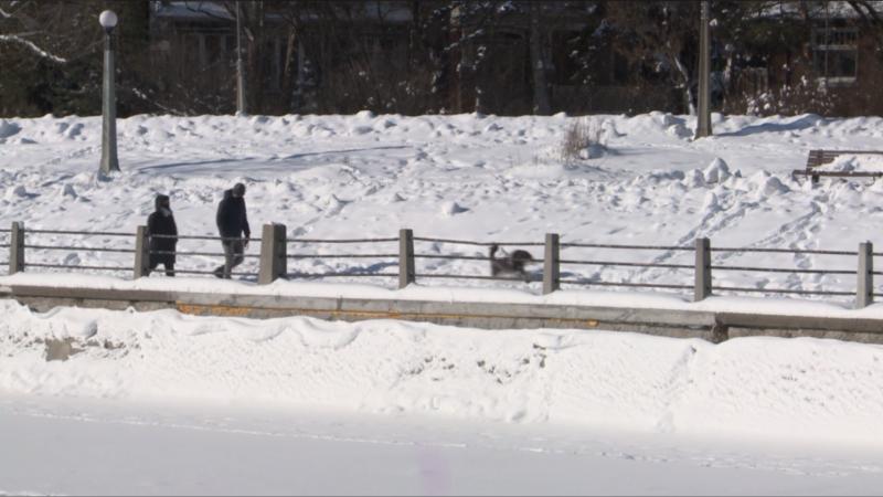 A couple walk their dog along the Rideau Canal in Ottawa. Jan. 23, 2021. (Mike Mersereau / CTV News Ottawa)