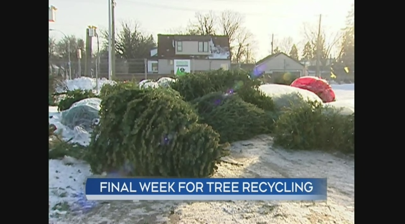 Last week for tree recycling