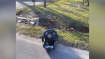 Amazon driver hailed a hero after rescuing baby