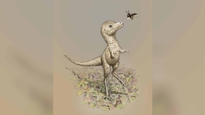 The baby tyrannosaurs would have been born with a full set of teeth, researchers say. (Julius Csotonyi via CNN)