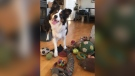 Whisky is pictured with his toys. (Claudia Fugazza/CNN)