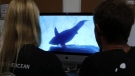 Juan Oliphant, right, and Ocean Ramsey, co-founders of One Ocean Diving and Research, look at footage their encounter with a great white shark in Haleiwa, Hawaii, on Jan. 17, 2019. (Caleb Jones / AP)