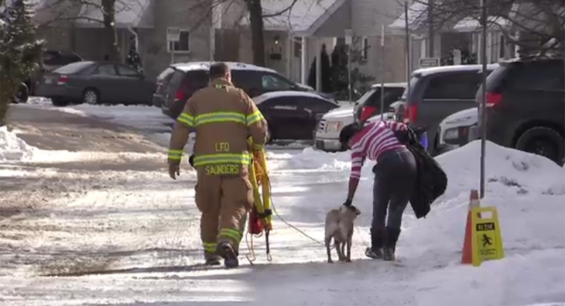 A London firefighter escorts a pug and its owner home after the dog jumped in the Thames River Wednesday, Jan. 27, 2021. (Brent Lale / CTV News)