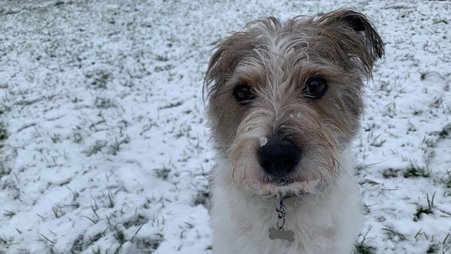 Paul Workman's dog Sam