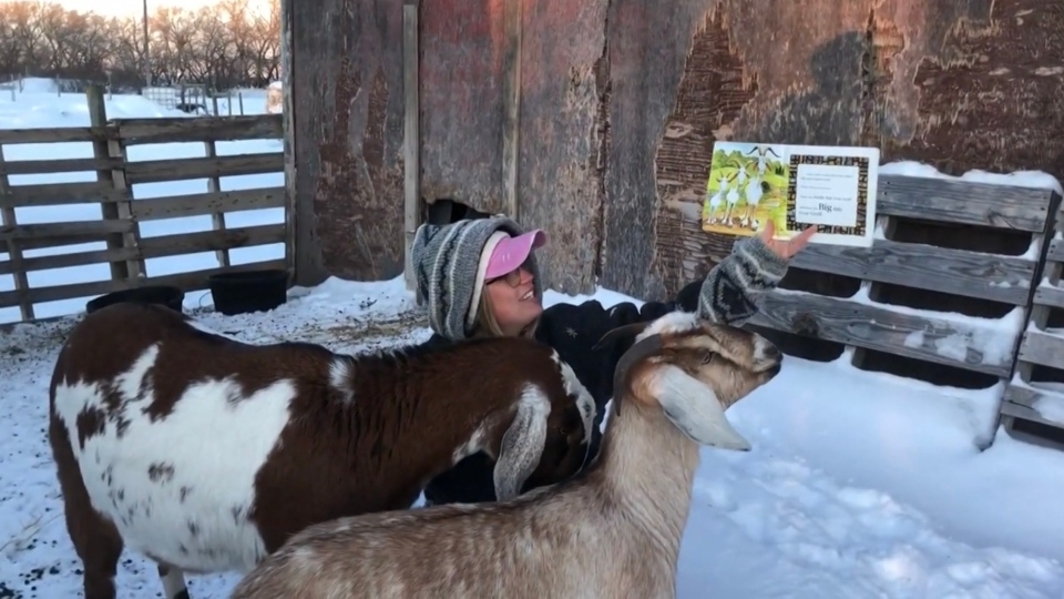 Sara Campbell read to goats on her farm for Family Literacy Day (Source: Mrs2Campbell, YouTube)