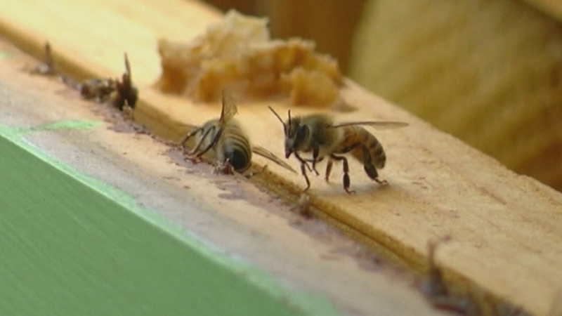 New studies reveal insect populations are on the d