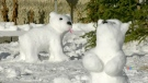 Winnipegger's snow bears hit 'Live with Kelly and