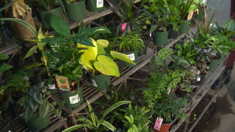 From tropical plants and blooms, to veggies. You can get growing indoors with Golden Acre Home and Garden.
