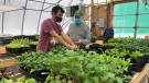 Inside the London Food Bank's greenhouse in London, Ont. on Friday, Jan. 29, 2021. (Nick Paparella / CTV News)