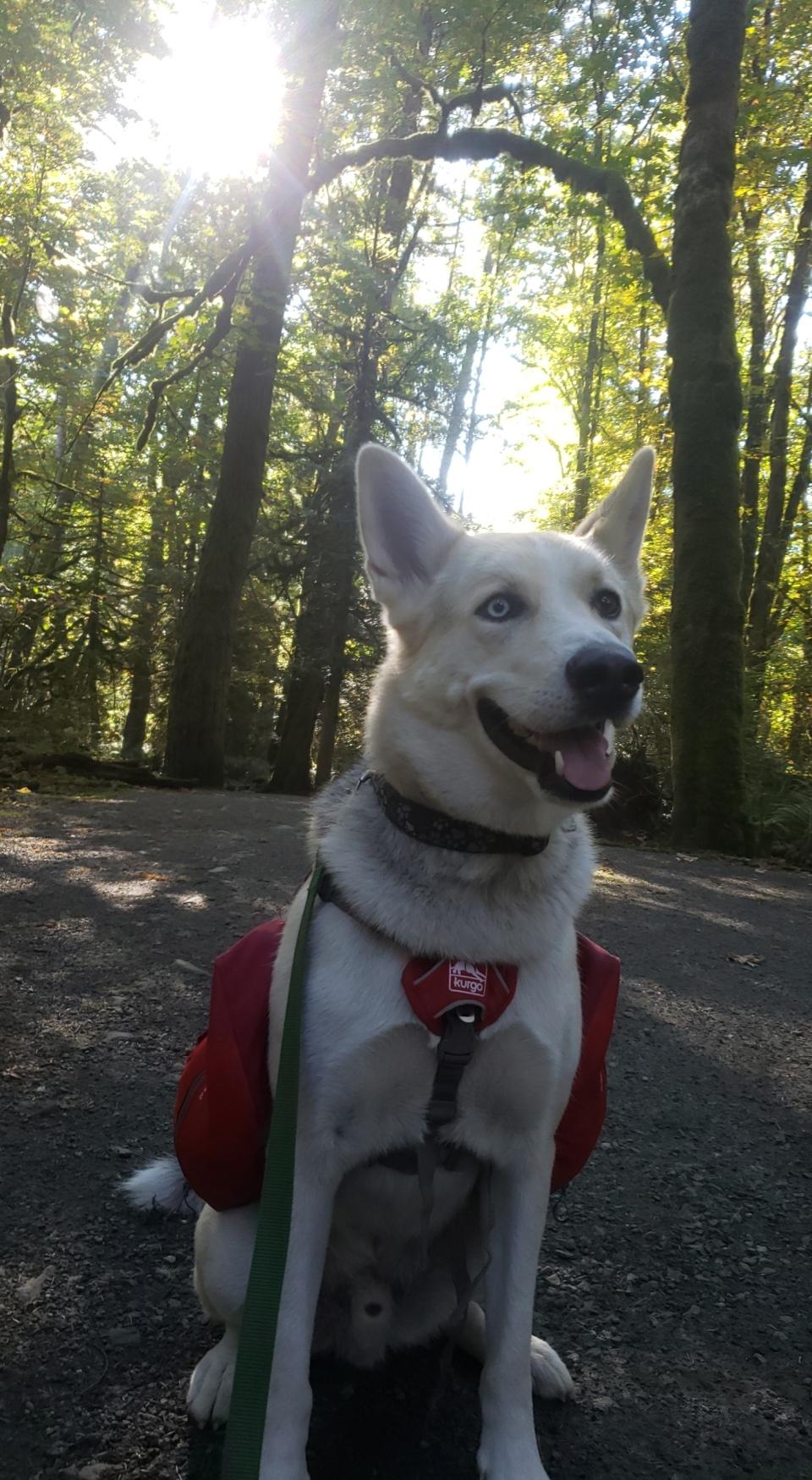 Keno the dog went missing on Jan. 25: (Jesse McMaster)