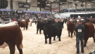 AGRIBITION