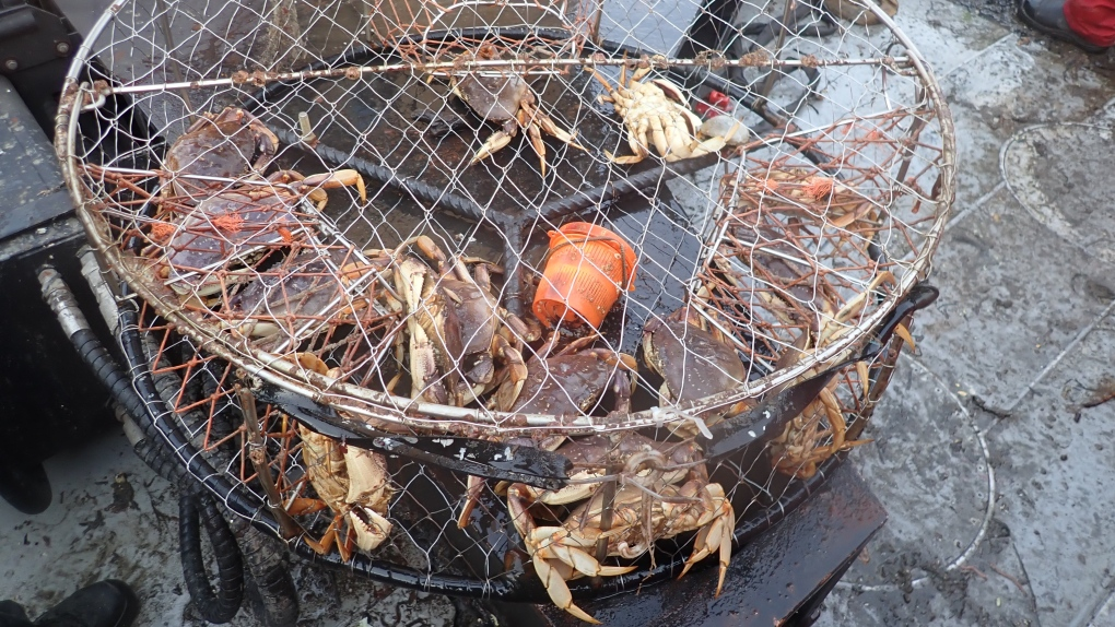 Crab traps seized