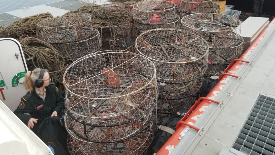 Crab traps in Boundary Bay
