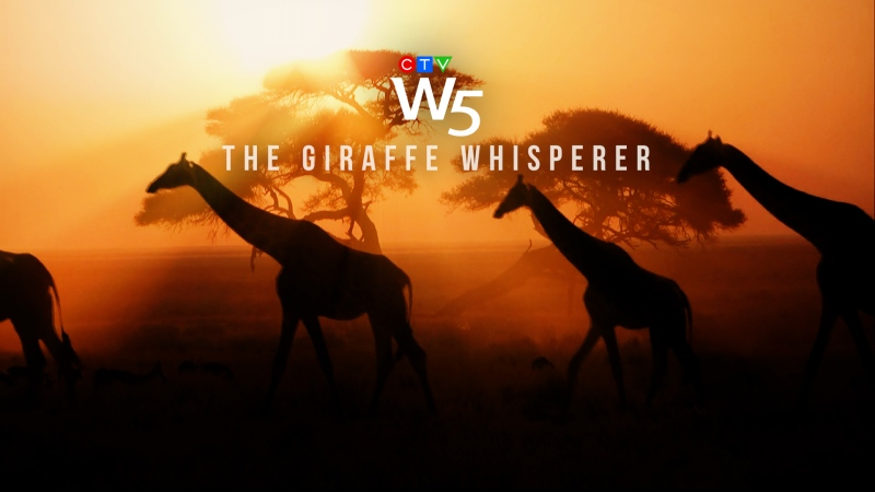 W5: The Giraffe Whisperer