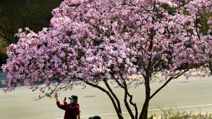 Health-care worker Nalini Persaud looks at her clipboard in the dialysis unit as she audits different health units for hand hygiene and sanitization at the Humber River Hospital during the COVID-19 pandemic in Toronto on Wednesday, December 9, 2020. THE CANADIAN PRESS/Nathan Denette