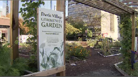 A community garden project thrives on Davie Street in downtown Vancouver. Oct. 31, 2009.