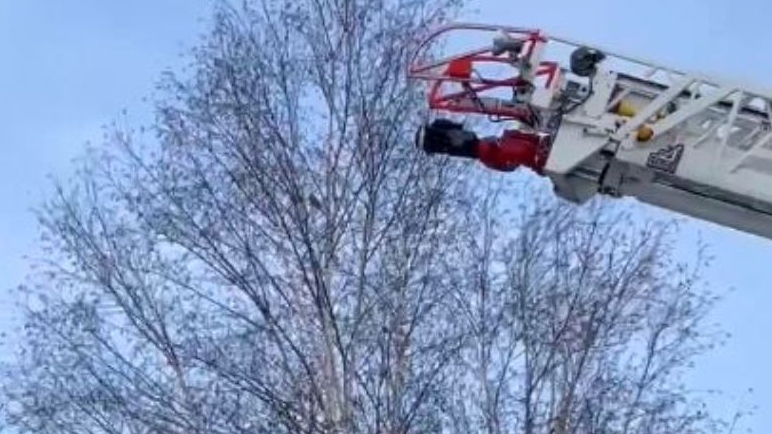 """London Fire Department rescues """"Lulu"""" the parrot on Feb. 14. 2021. (Angelika Moyer)"""