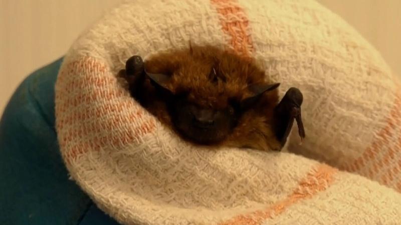 Bats rescued