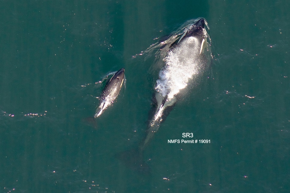 L125 and mother, L86, are shown: Feb. 17, 2021 (Dr. John Durban and Dr. Holly Fernback / Centre for Whale Research)