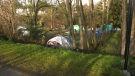 Cecelia Ravine Park, where a shovel-wielding man threatened bylaw officers and was arrested at gunpoint by Victoria police officers on Thursday, has several tents set up in it. (CTV)