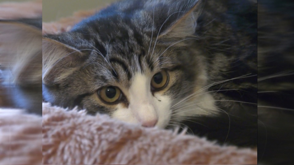 Spay and neuter program targets cats