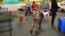 WATCH: Jaden Lee-Lincoln visits a brand new doggy daycare in the Queen City.