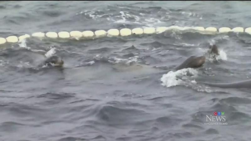 Island crews prepare for herring fishing season