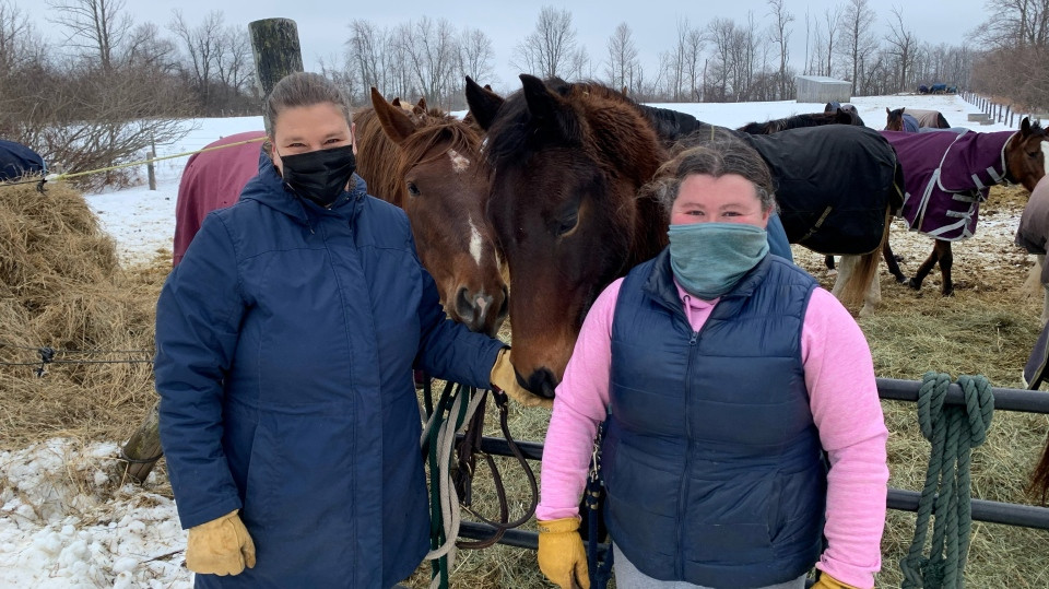 Horses at a farm with an EHV-1 outbreak