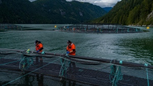 (BC Salmon Farmers Association)