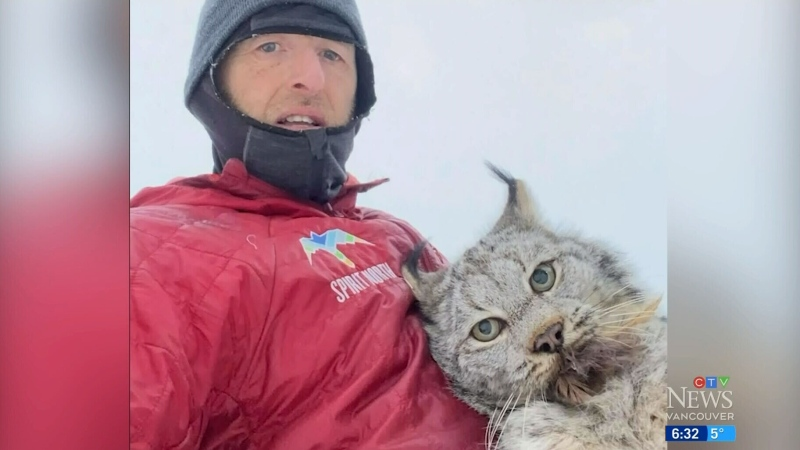 B.C. farmer catches lynx killing chickens